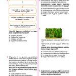 Tandem Sosyal Bilimler 5. Sınıf
